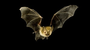 Why have bats been such an archetype of danger in the night?  Why are we so quick to think that a stranger is dangerous?