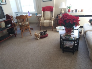 living room with dog